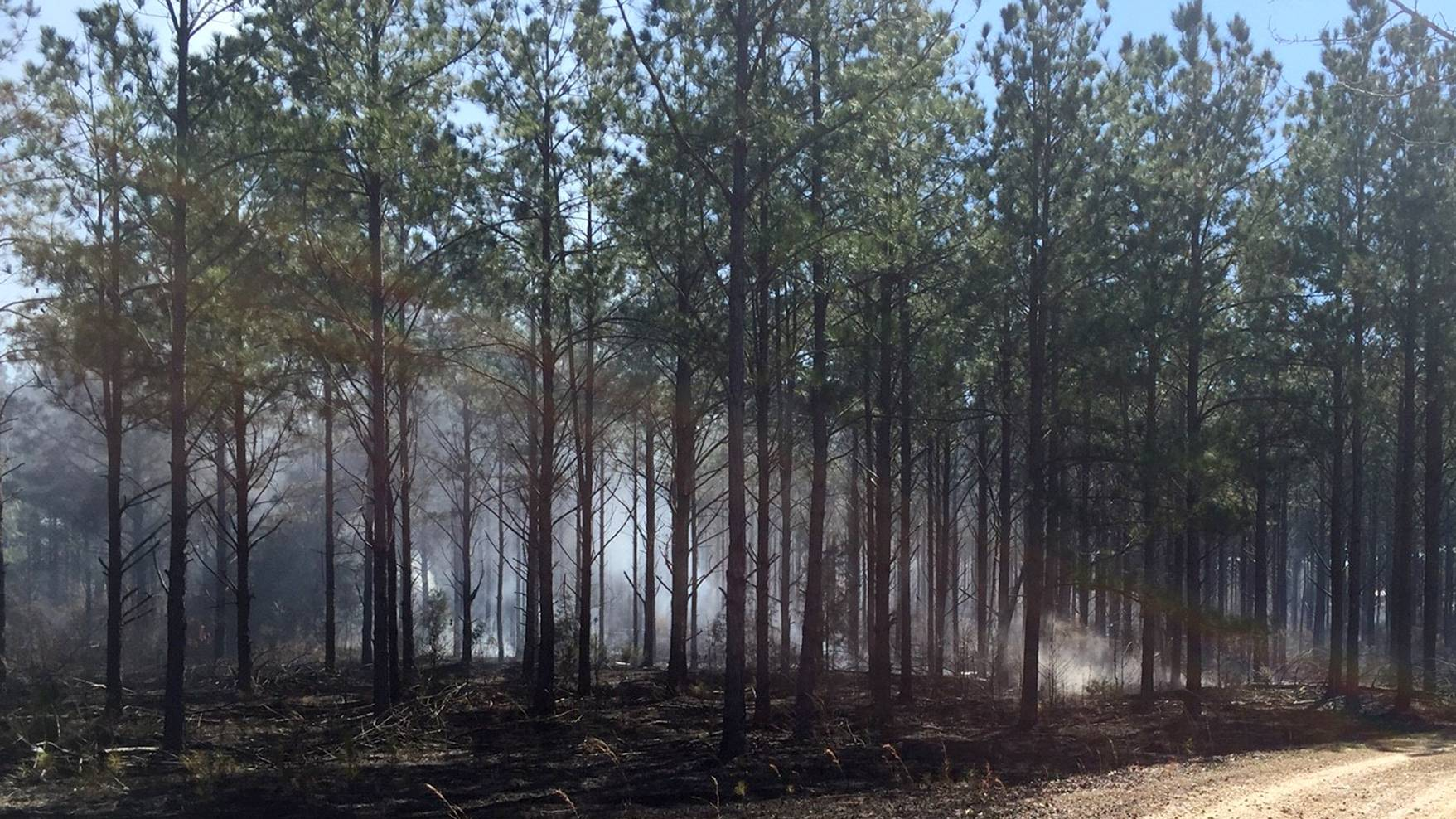 Prescribed burns can reduce the fuel available in forest land, significantly lessening the risk of an unmanaged forest fire. (Submitted Photo by Matt Walters)